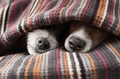 istock couple of dogs 519388263