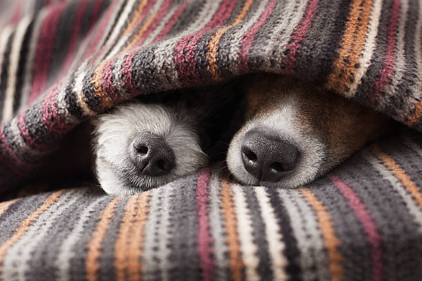 Couple of dogs picture id519388263?b=1&k=6&m=519388263&s=612x612&w=0&h=i1nj8d3jl xrw7aw o 6dbhui89q9ds0jypjyzg eiy=