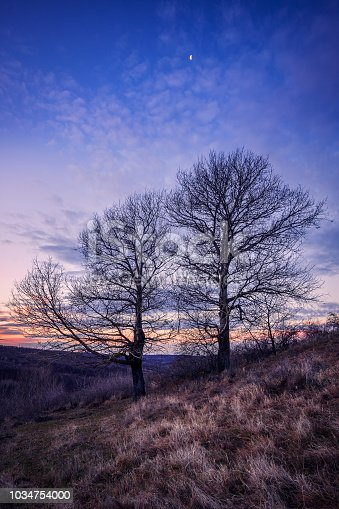 istock Couple of dry trees with the moon above at sunrise in December with some frost in the foreground 1034754000