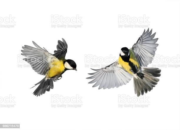 Couple of little birds chickadees flying toward spread its wings and picture id936215470?b=1&k=6&m=936215470&s=612x612&h=y2 vl55ol ntqtuxur kpjgdrimrnfjdtkch5yyvbms=