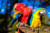 Couple of parrots staying on the edge of a wood