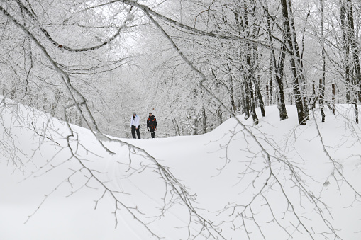 istock couple of people walking on snow path of frozen forest in Nebrodi Mountains of Sicily tourism outdoor activity 1242759499