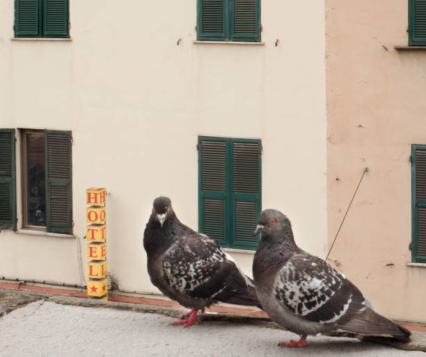 couple of pigeons in front of a hotel sign stock photo