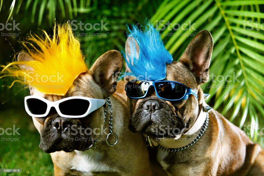 couple of punk royalty-free stock photo