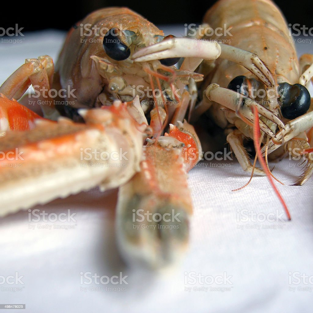 Couple of Raw Scampi royalty-free stock photo