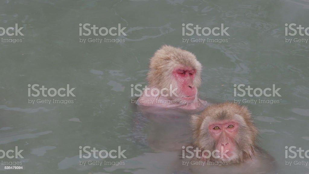 Par De Monos De Nieve Primavera Con Opciones Frías Y Calientes