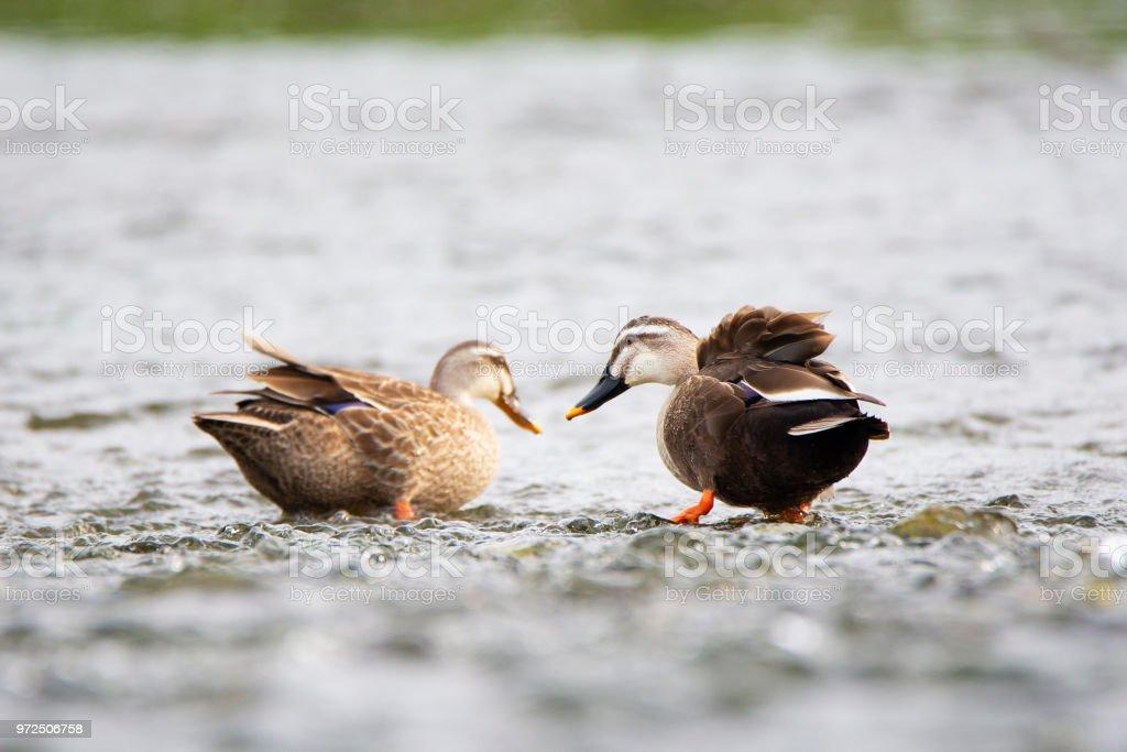 amoureux des oiseaux datant du site Kalamazoo Hook up