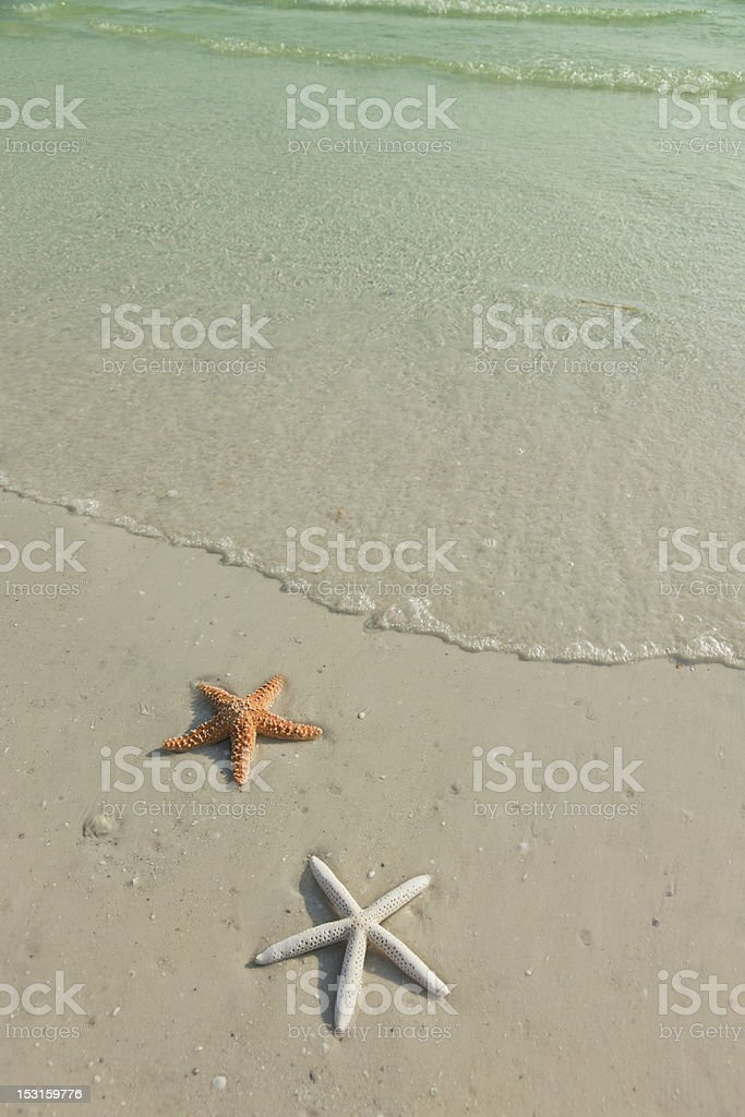Couple of starfish on a tropical beach, tide coming in royalty-free stock photo