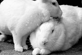 Two rabbits together.