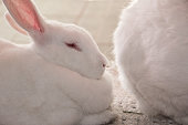 A lying rabbit and a piece of the other rabbit's ass.
