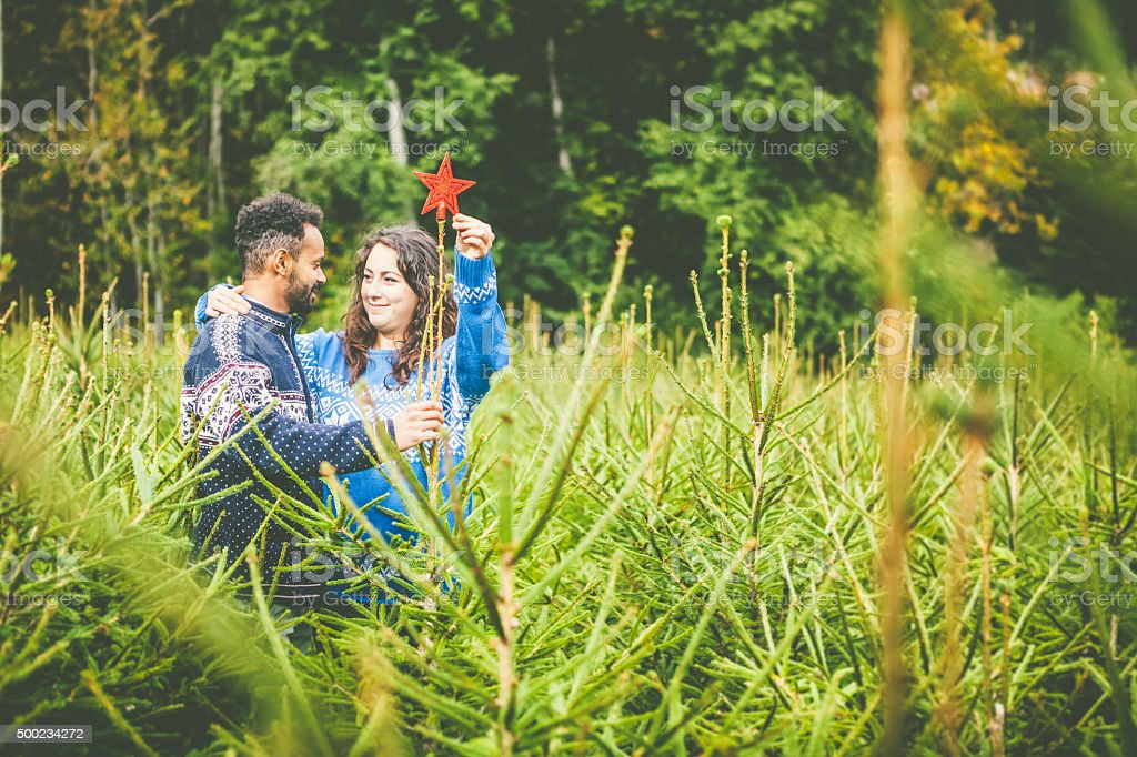 Couple of Young Adults Choosing the Fir Tree for Christmas stock photo