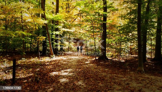 istock Couple on wooded path 1269341230