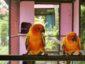 Colourful of couple parrot birds in the cage, animal pets