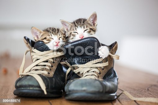 two puppyes sleeping inside a couple of vintage boots
