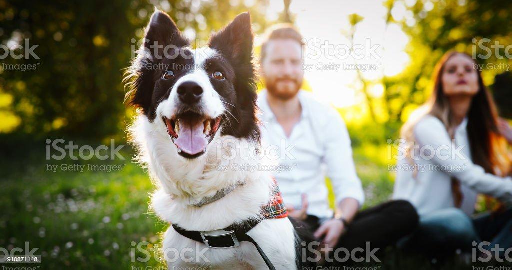 Paar mit Hunden spielen – Foto