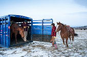 Couple work together to take horses out to work the beef cattle on their ranch on a cold windy morning during winter, Livingston, MT, USA