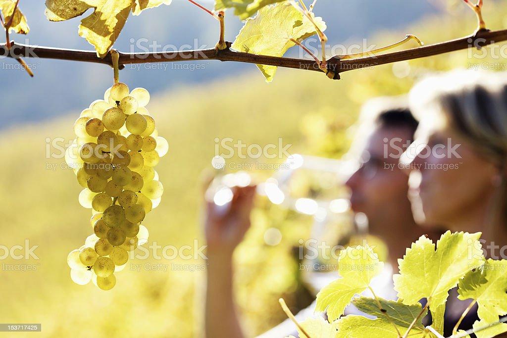 Couple de dégustation de vins dans les vignobles - Photo
