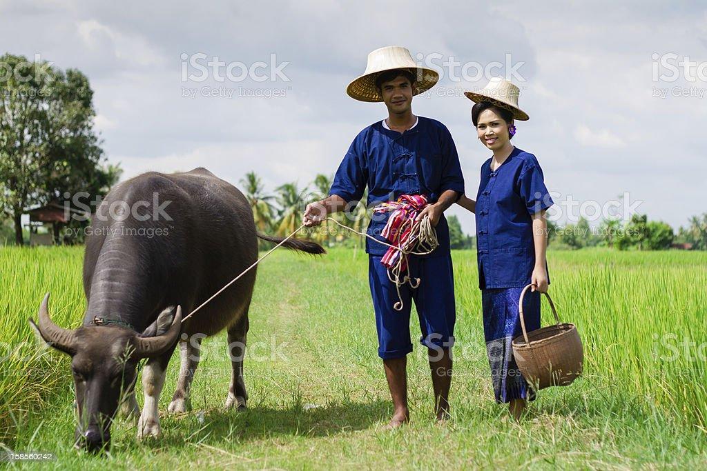 커플입니다 태국인 Farmer 버팔로 royalty-free 스톡 사진