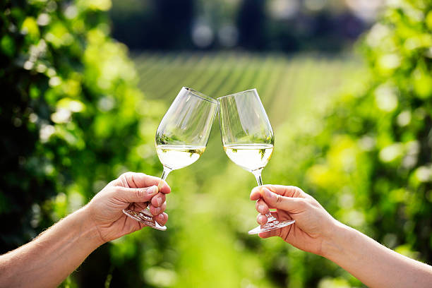 Couple toasting glasses of white wine in a vineyard stock photo