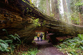 A couple tourists hiking in Redwood National Park, California
