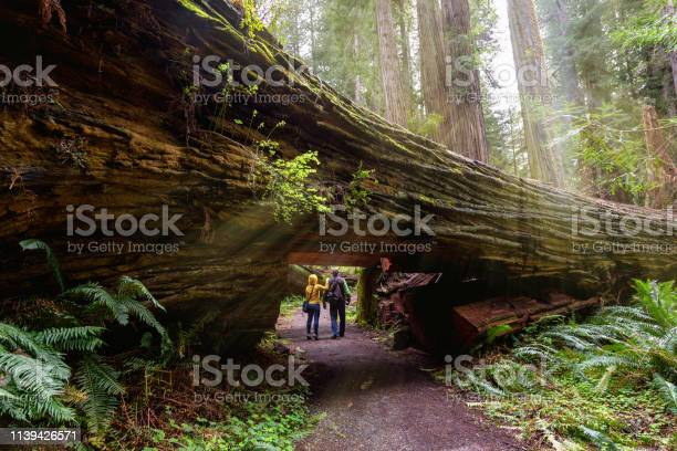 Photo of A couple tourists hiking in Redwood National Park, California