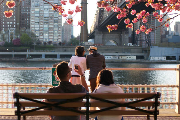 couple under a cherry blossom - roosevelt island foto e immagini stock