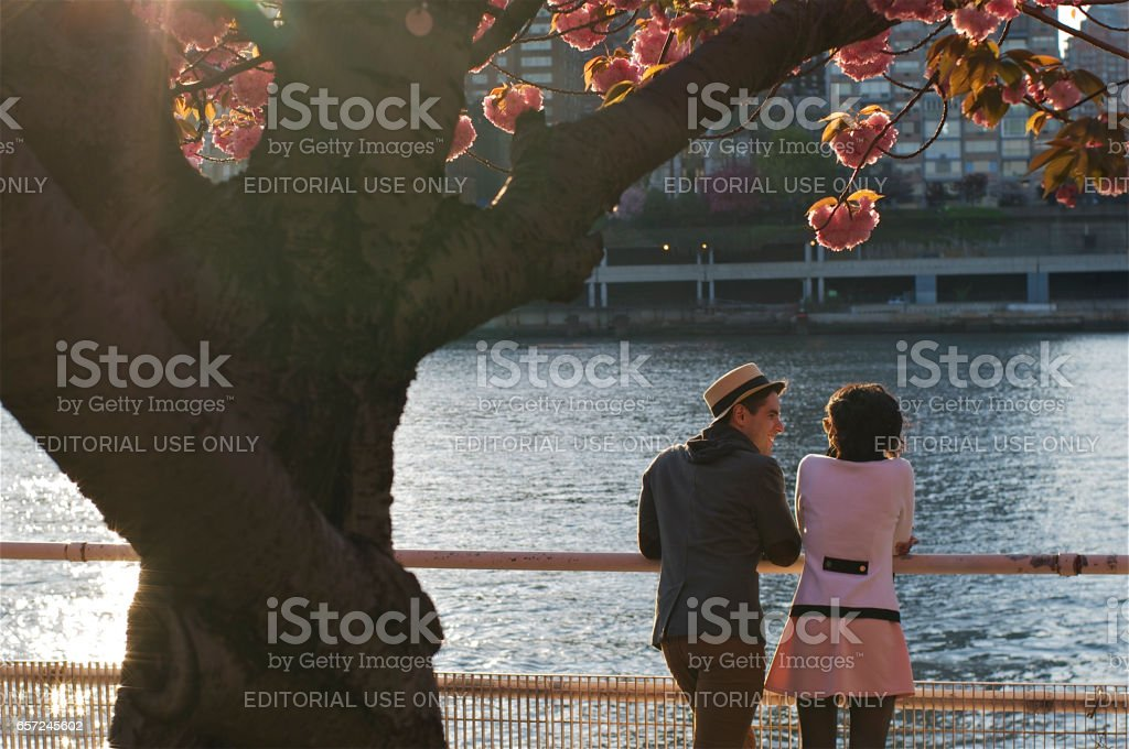 Couple under a Cherry blossom stock photo