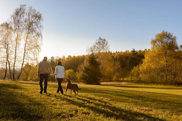 couple walk dog autumn sunset countryside meadow - hund skog bildbanksfoton och bilder