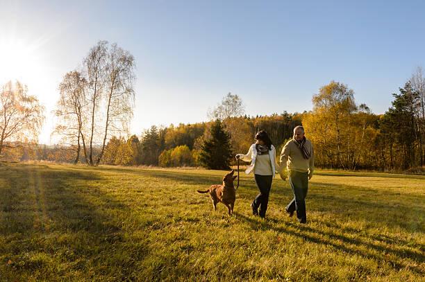 Couple walk dog in countryside autumn sunset picture id516981503?b=1&k=6&m=516981503&s=612x612&w=0&h=w3b7iodwak6rh9osqjglqdjjhfwblc rve77wu3qtky=