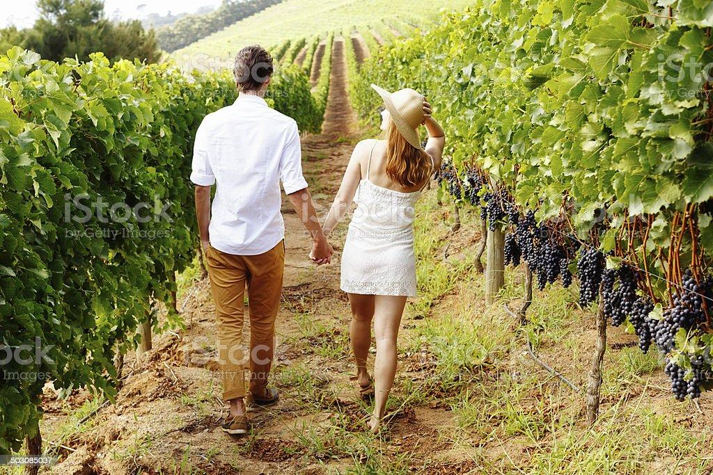 Couple walking away, hand in hand, through beautiful vineyard stock photo