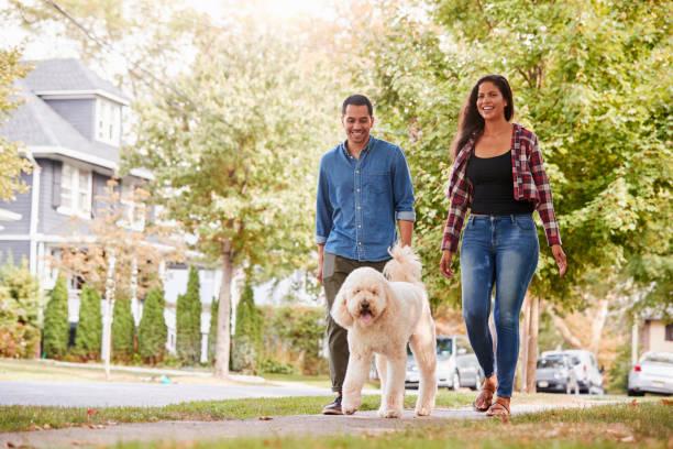 Couple walking dog along suburban street picture id905905036?b=1&k=6&m=905905036&s=612x612&w=0&h=ok cipopx bvmc ka85vp yzu0pzhk7too2ltfx udi=