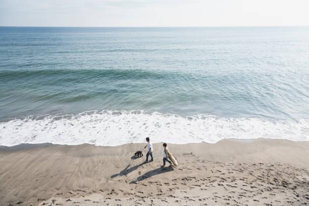 Acople o cão de passeio na praia - foto de acervo