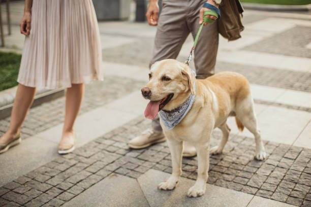 par gångavstånd hund - walking home sunset street bildbanksfoton och bilder