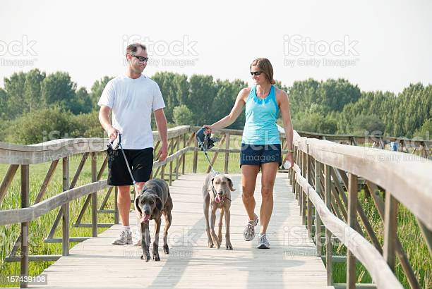 Couple walking dogs while exercising picture id157439108?b=1&k=6&m=157439108&s=612x612&h=m6gbibod6rjvlhosgoeawvwfojpulc q f4vtwjfgzm=