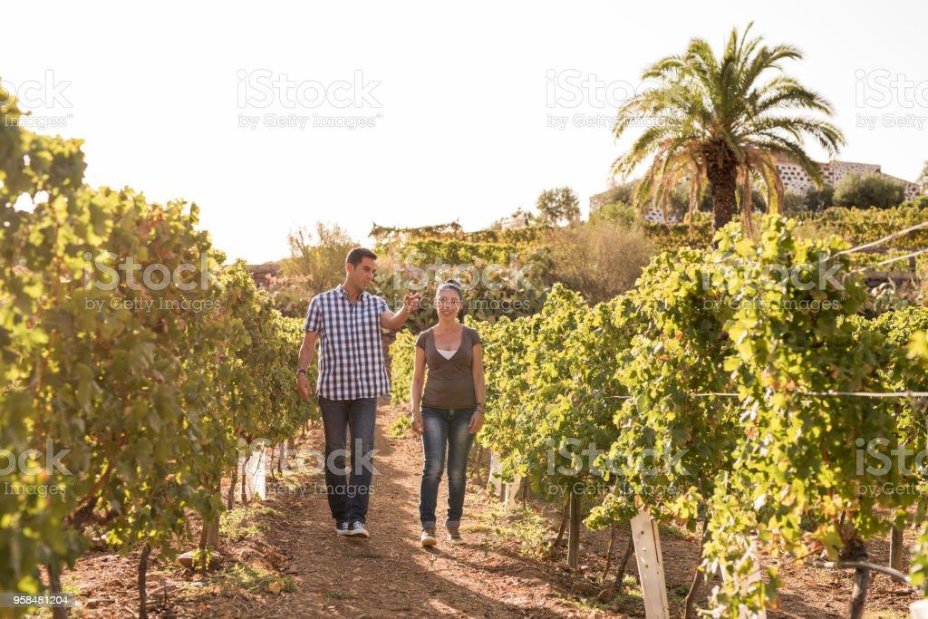 A couple walking through the vineyards stock photo