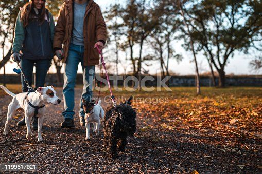 Couple walking with three dogs