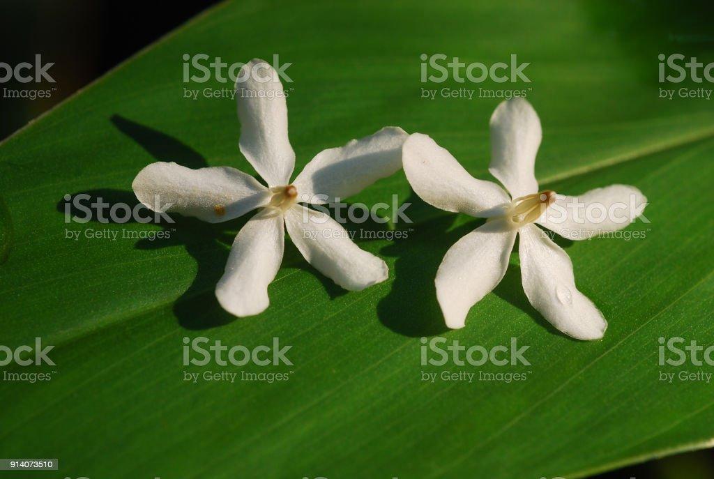 Couple white flower stock photo istock couple white flower royalty free stock photo mightylinksfo