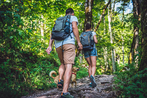Couple with a dog hiking in forest