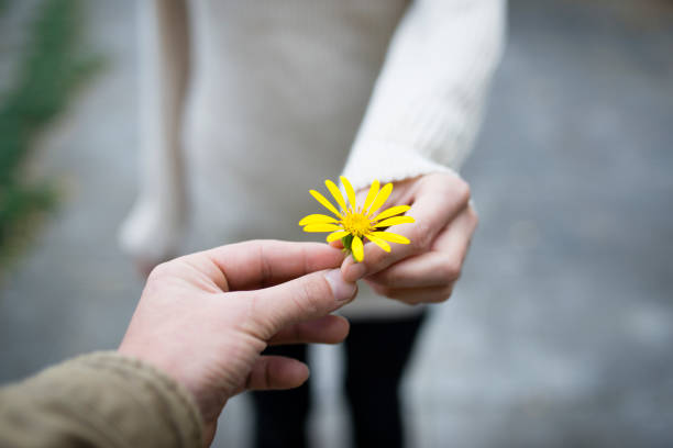 Couples hand over the yellow flower stock photo