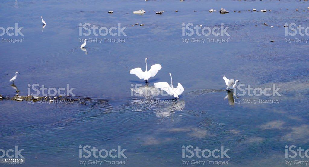 Coupling in the river. stock photo