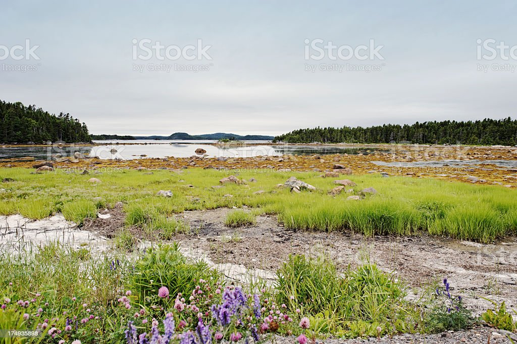 Cove in Newfoundland royalty-free stock photo