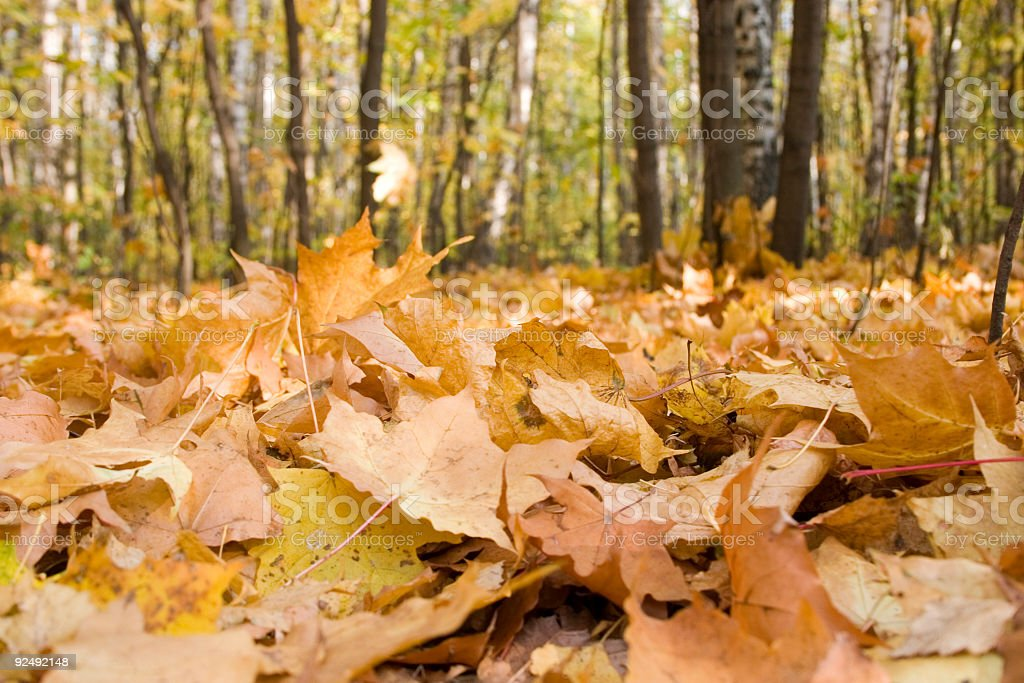 Cover of the autumn leafs royalty-free stock photo