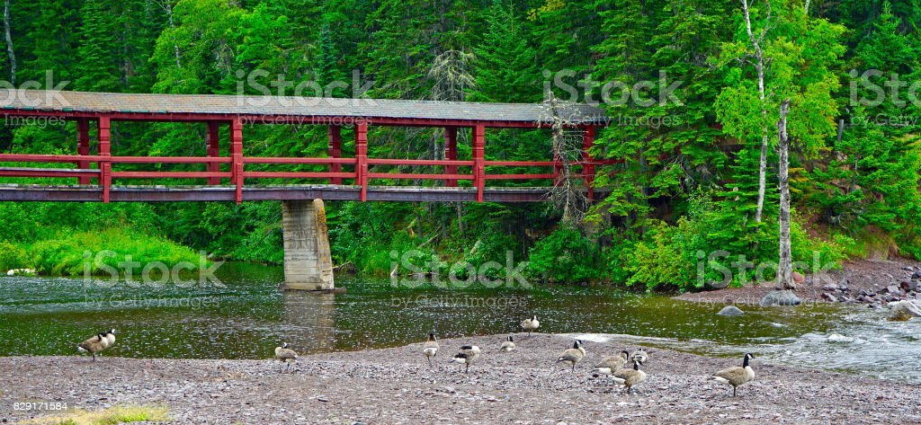 Covered Bridge and Geese at Lutsen stock photo