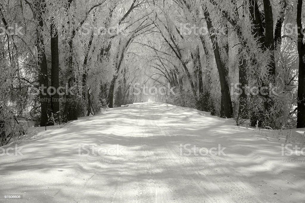 Covered Road royalty-free stock photo