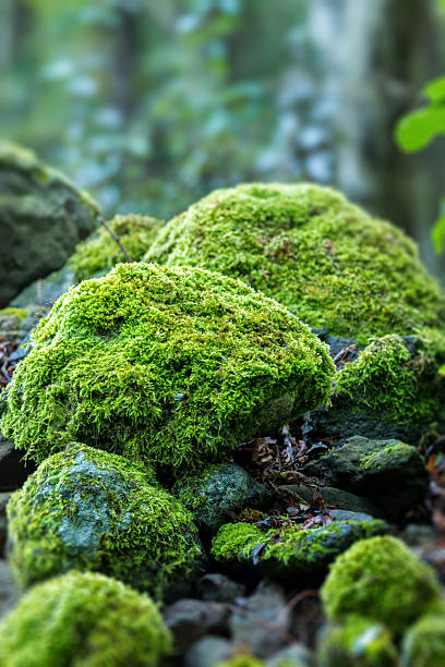 covered rocks with moss - moss stock pictures, royalty-free photos & images