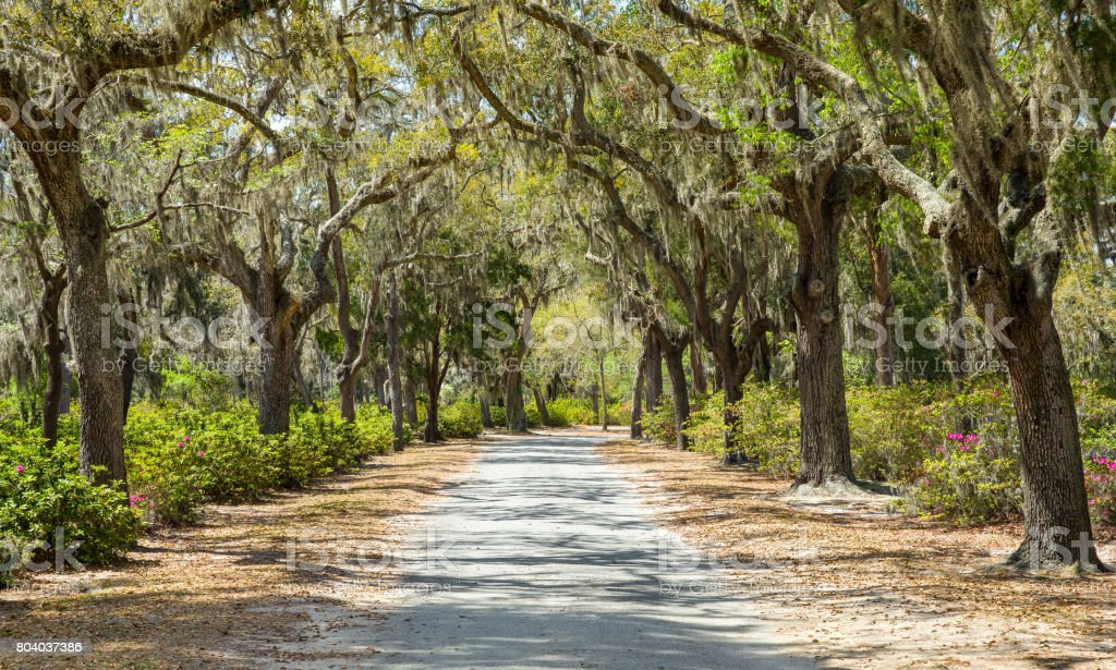 Covered Rural Road in the American South stock photo
