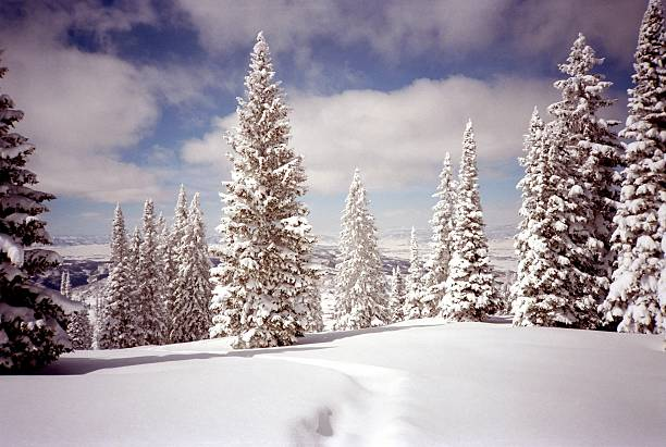 Covered Trail Photo of covered ski tracks at Steamboat Springs ski resort in Colorado. routt county stock pictures, royalty-free photos & images