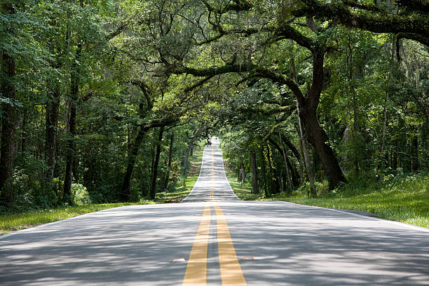 Covered two laned road Empty tree covered two lane road with double yellow lines with road going to a vanishing point canopy stock pictures, royalty-free photos & images