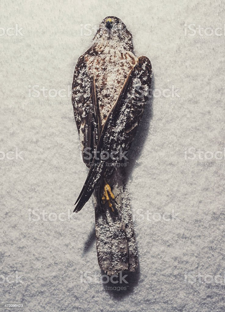 Covered Wings stock photo
