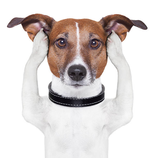 covering ears dog covering both ears dog with paws hear no evil stock pictures, royalty-free photos & images